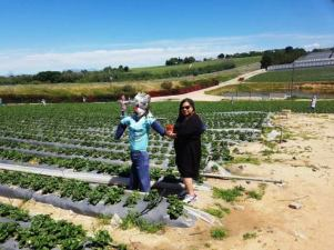 city-girl-vibe-strawberry-farm