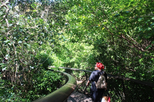 city-girl-vibe-x-boomslang-canopy-tree-top-walk