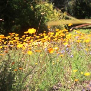 city-girl-vibe-x-kirstenbosch-national-botanical-gardens-spring-blooms