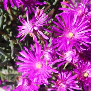 city-girl-vibe-x-kirstenbosch-national-botanical-gardens