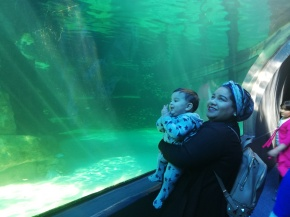 {Explore Cape Town} The Two Oceans Aquarium