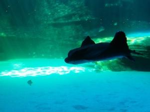 city-girl-vibe-x-two-oceans-aquarium-08
