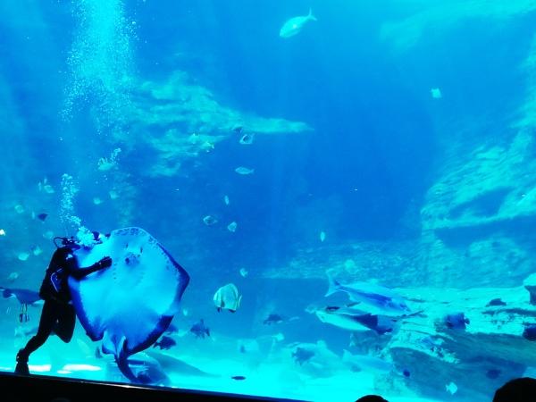 city-girl-vibe-x-two-oceans-aquarium-feeding-time