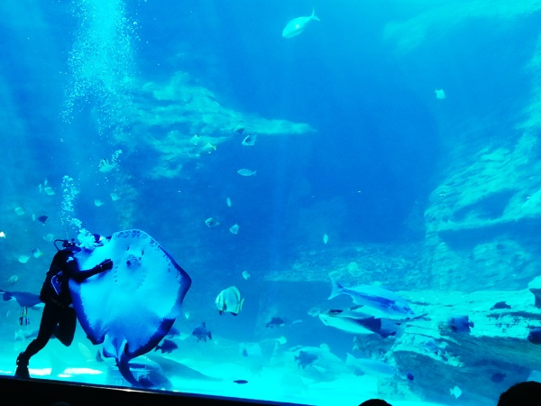city-girl-vibe-x-two-oceans-aquarium-feeding-time