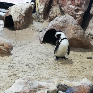 city-girl-vibe-x-two-oceans-aquarium-penguins