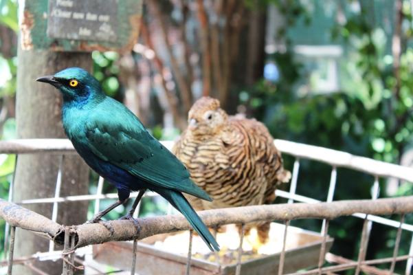 city-girl-vibe-world-of-birds