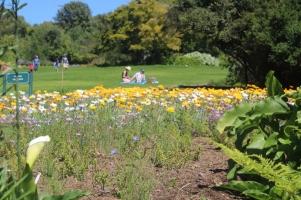 city-girl-vibe-x-kirstenbosch-botanical-gardens-1