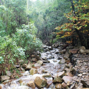 city-girl-vibe-x-newlands-forest-3