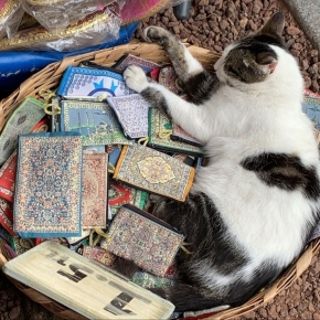 {Travel} #CatsofIstanbul